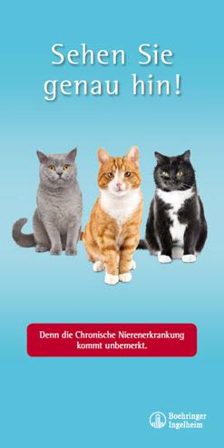 Infoflyer CNE bei Katzen