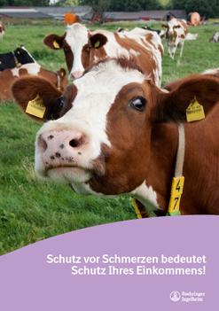 Broschüre zu Schmerzen bei Rindern
