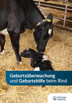 Broschüre zur Geburtshilfe bei Kühen