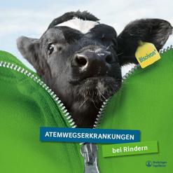 Broschüe zu Atemwegserkrankungen bei Rindern