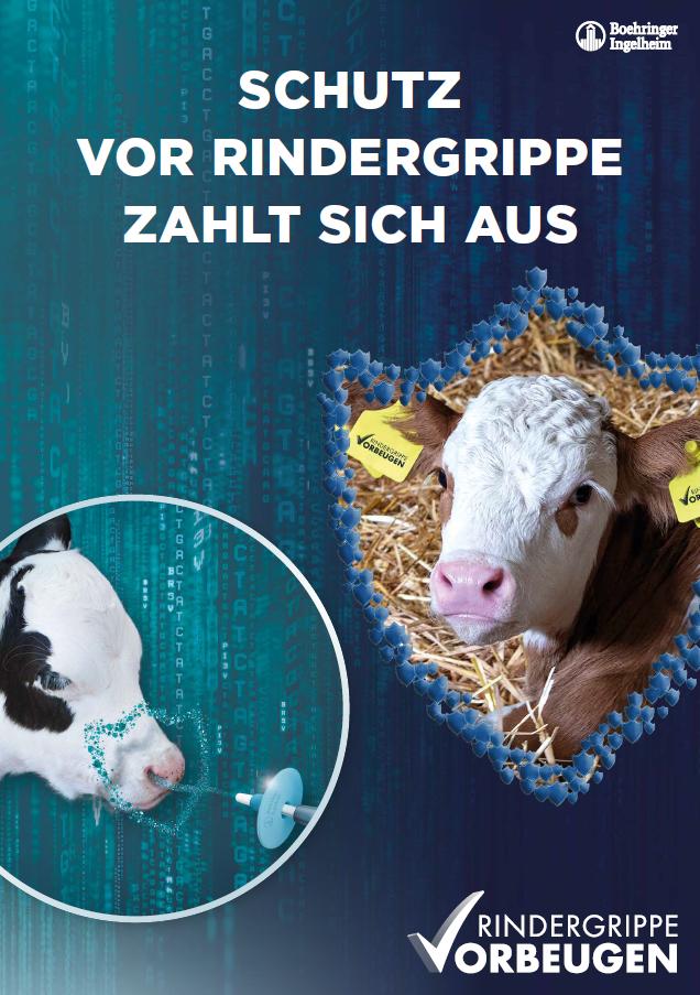 Schutz vor Rindergrippe zahlt sich aus