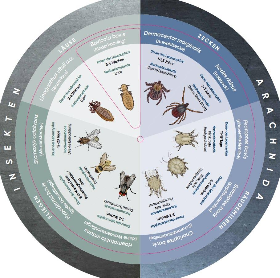 Parasiten Drehscheibe